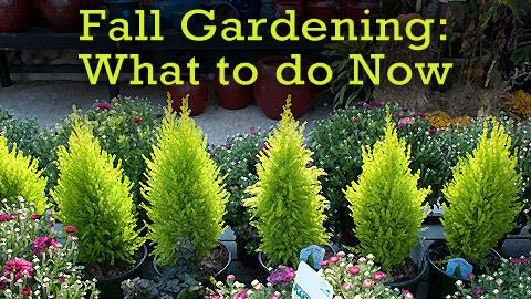 Fall Gardening josaelcom
