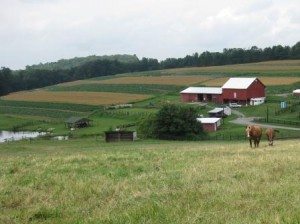 Reed & Danetta's Farm