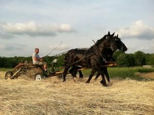 Katie & Greg's horses