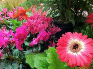 GC_flowers
