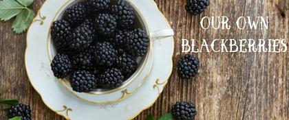 Our Own Blackberries
